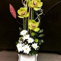 Cvećara Ciklama